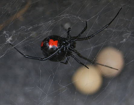 Black Widow by Michelle Cawthon