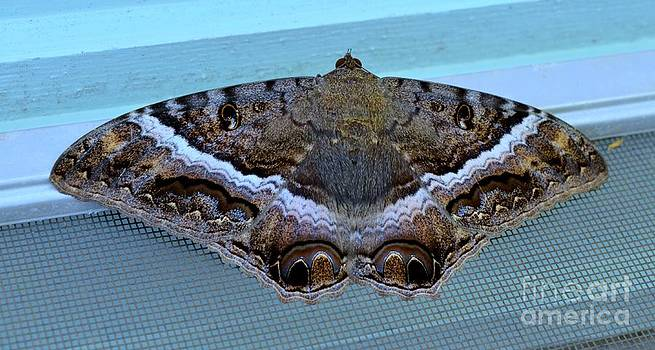 Mary Deal - Black Witch Moth