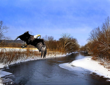 Randall Branham - Blaine Hwy Paint Creek Eagle
