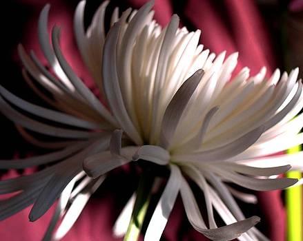 Blanche 94 by Gilda Pontbriand