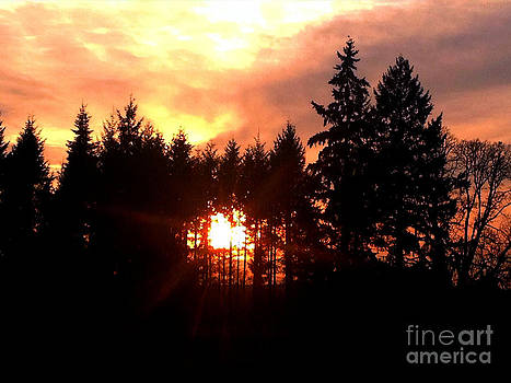 Nick Gustafson - Blazing Forest Sunset
