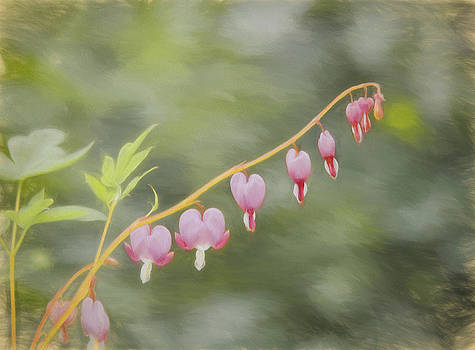 Kim Hojnacki - Bleeding Hearts