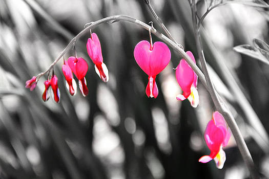 Bleeding Hearts by Mary Burr