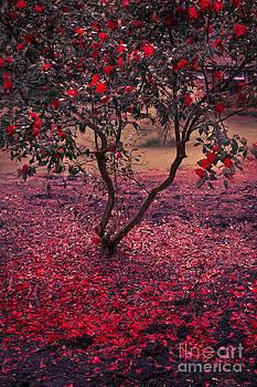 Svetlana Sewell - Bleeding Tree