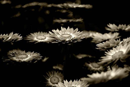Sumit Mehndiratta - Blessed flowers