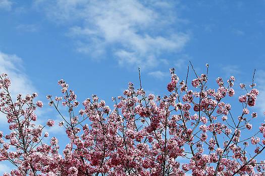 Bloom by Mark DeJohn