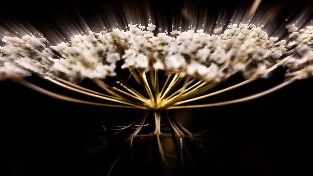 Bloom by Slawek Sepko