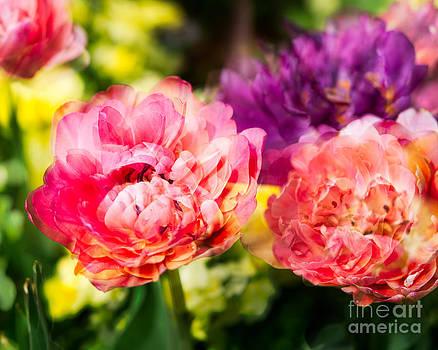 Sonja Quintero - Blooming Blooms