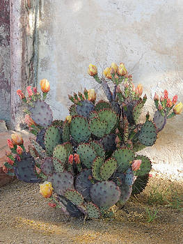 Blooming Cactus by Gordon Beck