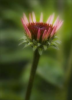Blooming by Teresa Moore