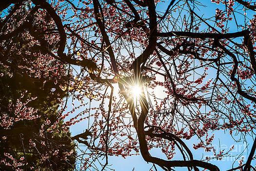 Jamie Pham - Blossom Burst