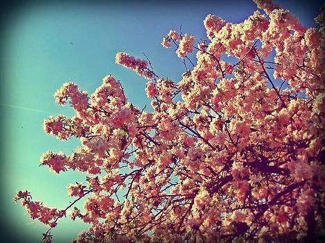 Blossom by Emma Bjorn