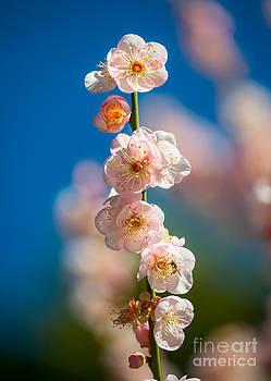 Jamie Pham - Blossom