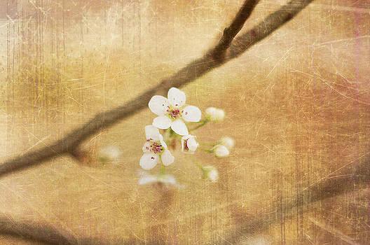 Blossom by Sofia Walker