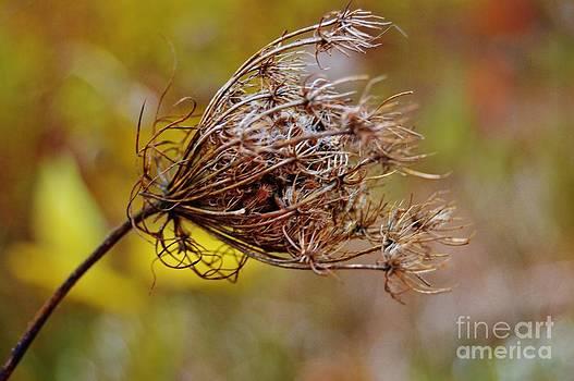 Blowing in the Wind by Brigitte Emme