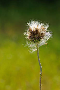 Blowing in the Wind by Sarah Rodefeld