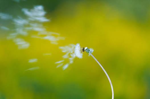 Blown Away by Sebastian Musial