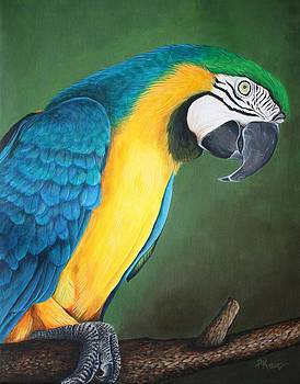 Blue and Gold Macaw by Pam Kaur