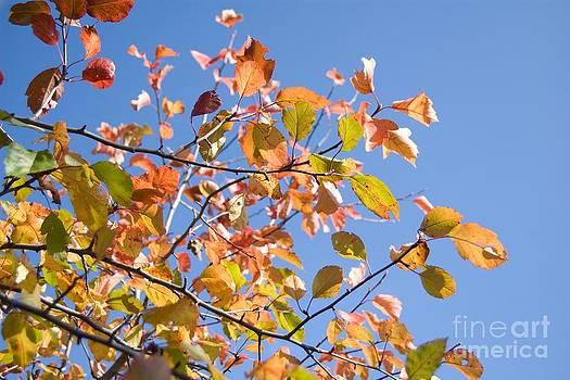 Blue Autumn Skies by Katerina Vodrazkova
