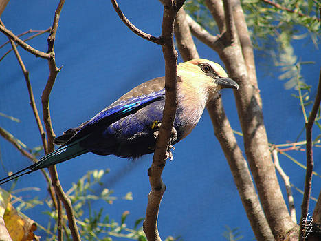 Blue Bird by Brooke Fuller