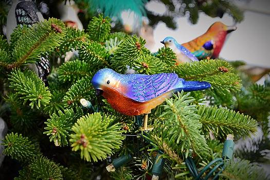 Blue Bird Christmas Ornament by Wanda J King