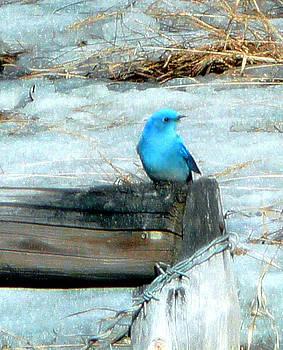 Blue Bird by Dirk Lightheart