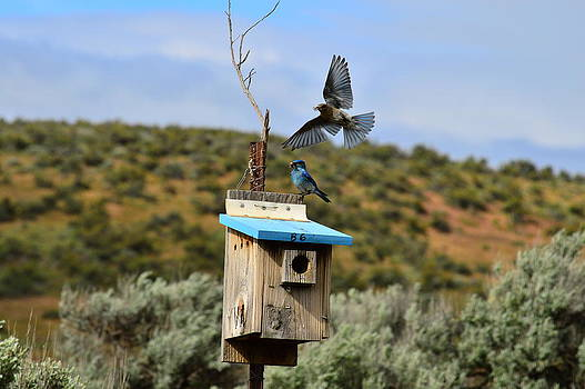 Blue Bird by Duane King