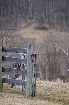 Blue Bird by Heidi Poulin