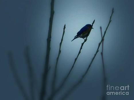 Blue Bird by K L Roberts