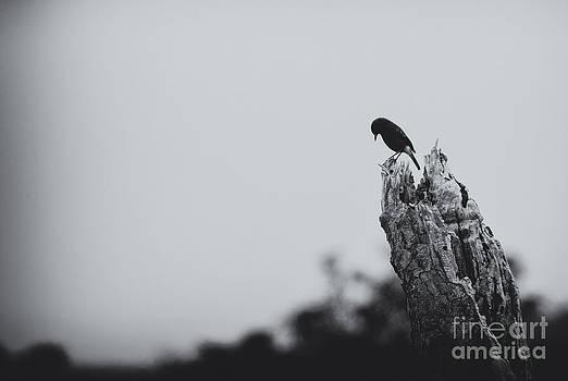Venura Herath - Blue Bird Weeping