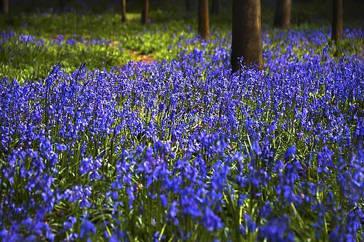 Svetlana Sewell - Blue Blue Bells