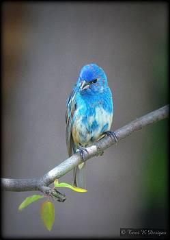 Blue Bunting by Terri K Designs