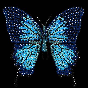 Blue Butterfly Black Background by R  Allen Swezey