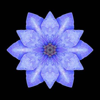 Blue Clematis Flower Mandala by David J Bookbinder