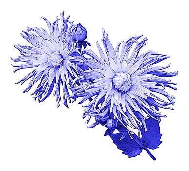 Jane McIlroy - Blue Dahlia