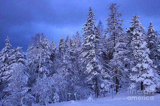 Blue Dawn by Jesslyn Fraser