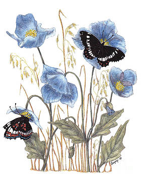 Stanza Widen - Blue-Day Butterfly