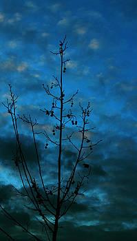 Blue Dusk by Eremia Catalin