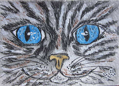 Blue Eyed Stripped Cat by Kathy Marrs Chandler