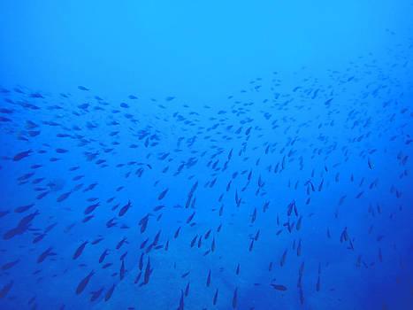 Blue Fish School by Roberta Sassu