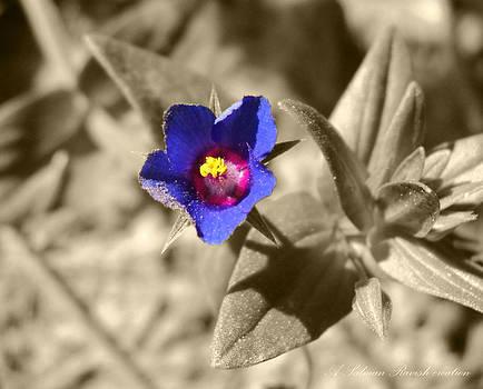 Blue flower by Salman Ravish