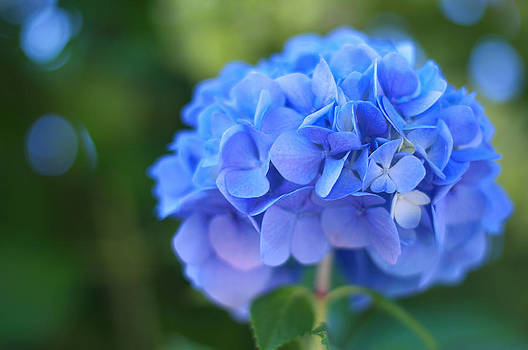 Blue by Graham Hawcroft pixsellpix