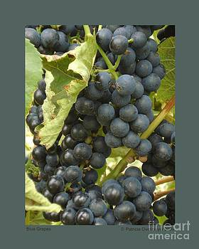 Blue Grapes by Patricia Overmoyer