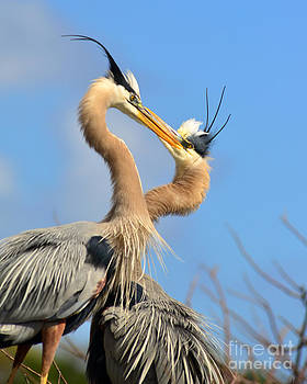 Blue Heron Love by Jane Axman