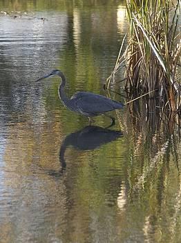 Blue Heron by Patricia McKay