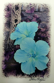 Blue Hibiscus by Steven Clayton