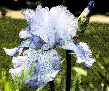 Blue Iris by Greg Reed