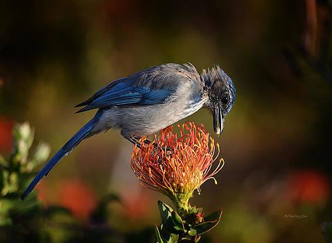 Xueling Zou - Blue Jay 1