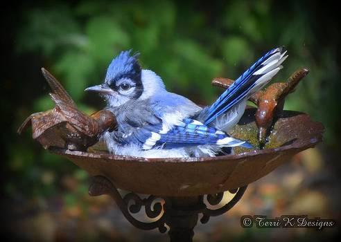 Blue Jay Bath by Terri K Designs