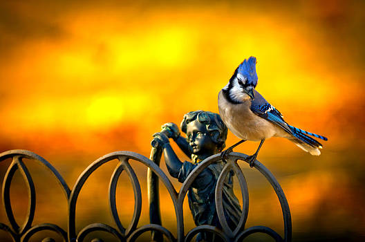 Blue Jay boy scooter fence by Randall Branham